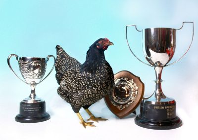 Best Exhibition Female, Best Opposite Sex, Best Any Other Colour at the National 2015