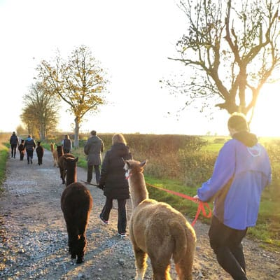 Gift Voucher Alpaca Walk