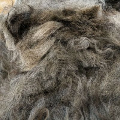 Silver Grey Alpaca Fleece