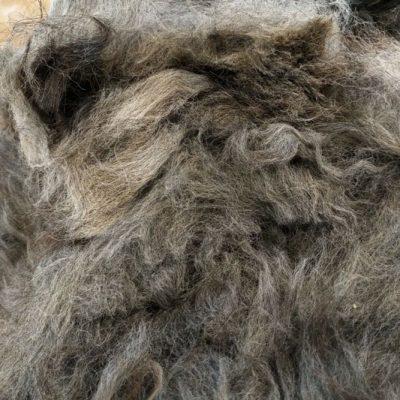 Silver Grey Alpaca Fleece