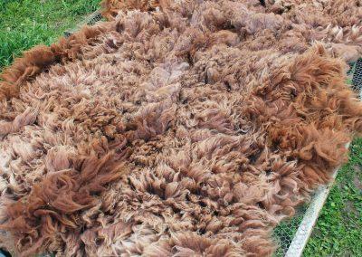 Mungo's Fleece